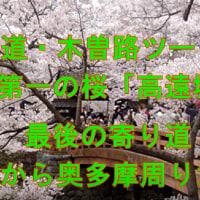 中山道・木曽路ツー Ⅹ 天下第一の桜「高遠城址」・ 最後の寄り道は、松姫峠から奥多摩周りだ ^^