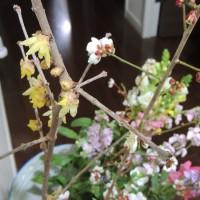 バケツの中に春が来た!