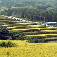 韓国の棚田
