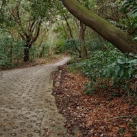 暗峠~なるかわ園地・自然の大パノラマを楽しむ