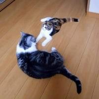 うちのネコたちと過ごす日々