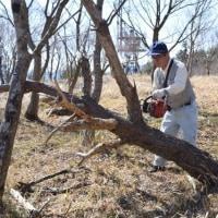 森林ボランティア活動  湯ノ見岳愛育会