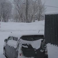 また雪です(>_<)