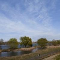 ラブホ池の柳も芽吹き…多摩川春景色シリーズ