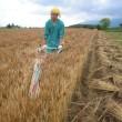 【119】麦畑…追記