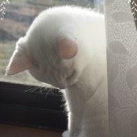 大寒波 猫はこたつで丸くならない?