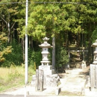 福島県天栄村、板宮神社の社叢です!!