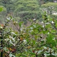 春の奈良 大阪 京都