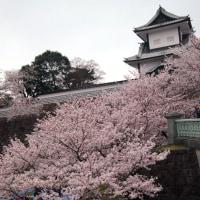 お花見、兼六園 2017