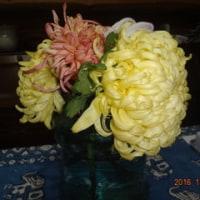 菊の花の終わり