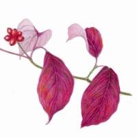 ハナミズキの紅葉と実