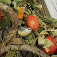 カラスウリと蔓物のアレンジ