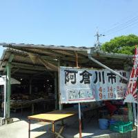大きな樹の下で 阿倉川市場。