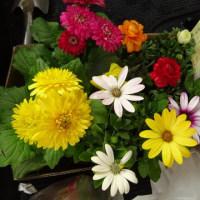 またお花買ってしまった♪