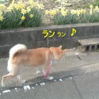 今朝のお散歩♪