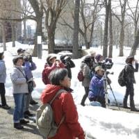 3月29日(水)はじめてシリーズ「バードウオッチング」北大構内の様子