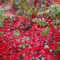 掬翠園の紅葉