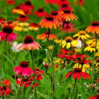 こころの潤い花