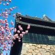 八重桜と松江城
