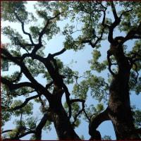 樹伸びる光景