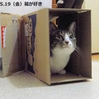 あいちゃんは箱が好き