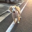 よく歩いてくれて嬉しい。