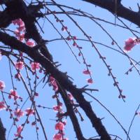 待たれる春・法華経寺