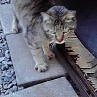 母猫を確認