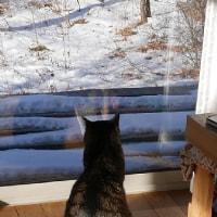 毎日一緒に居ても猫の気持ちは分からない