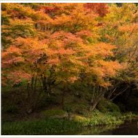環境芸術の森の紅葉