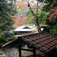 旧古河庭園 紅葉に雪・・3