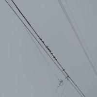雀が気持ちよさそうに並んでいた
