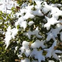 積雪約2cm