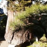 「ロダンと近代日本彫刻」展の平櫛田中彫刻美術館へ