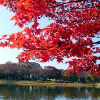 昭和記念公園便り 11月27日
