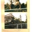狛犬 No21-444 春日部市 柏壁 春日部八幡神社 ②