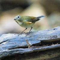 鳥撮り再開