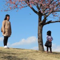 河津桜 伊勢崎市民の森公園