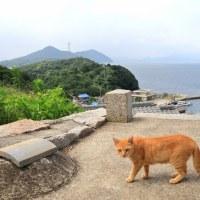 瀬戸内A島の猫たち 2016年 7月 その4