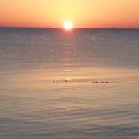 立春の朝、おだやかな海。