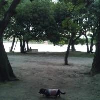 ☆休日大濠公園☆