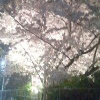 「森林の樹木」