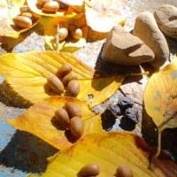 秋だね~。