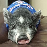 豚君との生活は、、、