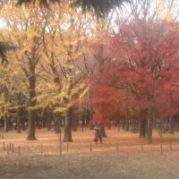 滞在型家庭菜園:紅葉