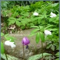 山野草は春の使者