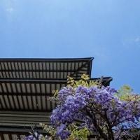 藤の花を見に新緑ラン