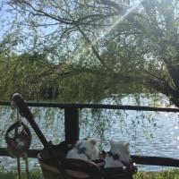 三ツ池公園   ⑵