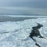 流氷を観る旅2:流氷1