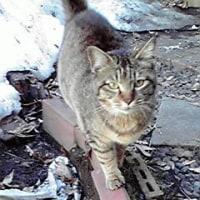 越冬した野良猫